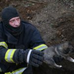 В столице спасатели вызволили из плена семерых щенков (ВИДЕО)