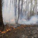 Крупный пожар на границе с Молдовой: горит сухая растительность (ФОТО, ВИДЕО)