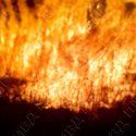 В Тирасполе загорелся камыш. Возгорание оперативно потушили
