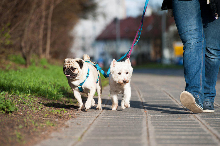 Примария проводит опрос среди горожан: какие зоны выделить для прогулок с собаками