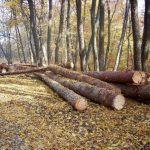 В национальном лесном фонде приостановлены все виды вырубки