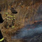 Пожарные ликвидировали полсотни очагов возгораний растительности