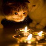 Сотни жителей столицы останутся в четверг без света