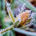 """""""Жёлтый код"""": синоптики вынесли предупреждение из-за заморозков на почве"""