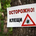 14 случаев укусов клещей зафиксировали в Приднестровье за два месяца