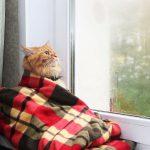 В выходные дни будет прохладно, местами пройдут дожди
