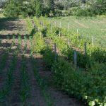 Влажность в пахотном слое почвы достигла необходимой в этот период нормы