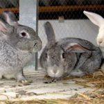 """""""Пушистый"""" улов: двое приятелей украли у жительницы Вулканешт кроликов"""