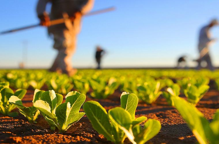 Додон: Ситуация в сельском хозяйстве выровнялась