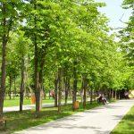 На Рышкановке появилось еще одно благоустроенное место для отдыха: сквер Mezon (ФОТО)