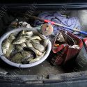 Незаконный улов обернётся рыбаку крупным штрафом (ФОТО)