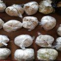 Продавали наркотики онлайн: в столице задержали двух рецидивистов (ВИДЕО)