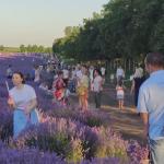 Деятельность парков аттракционов и проведение ярмарок в Молдове временно запрещены