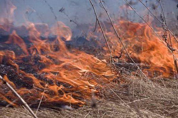На Радоницу граждан просят не сжигать мусор и сухую траву