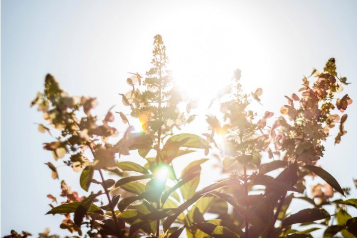 В ближайшие дни в Молдове ожидается жара