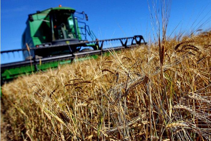 Правительство выделит дополнительную помощь пострадавшим от засухи аграриям (ВИДЕО)