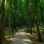 Чебан – кишиневцам: Выбирайте для прогулок немноголюдные места