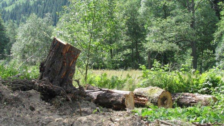 Наломали дров: троих сельчан наказали за незаконную вырубку деревьев