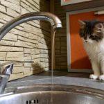 Сотни столичных жителей останутся во вторник без воды в кране