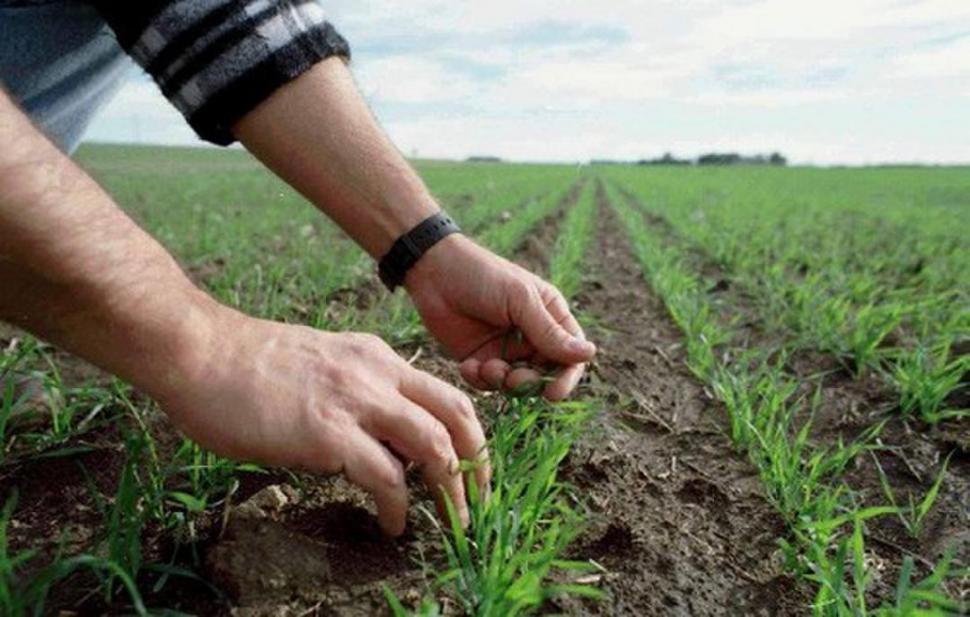 Правительство предоставит дополнительную помощь фермерам