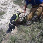 Необычная спецоперация: спасатели вытащили из карьера двух коз (ФОТО, ВИДЕО)