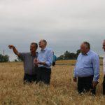Средняя урожайность пшеницы в Молдове в этом году составит 2 тонны с гектара