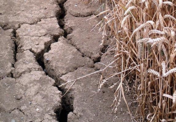 В тисках засухи