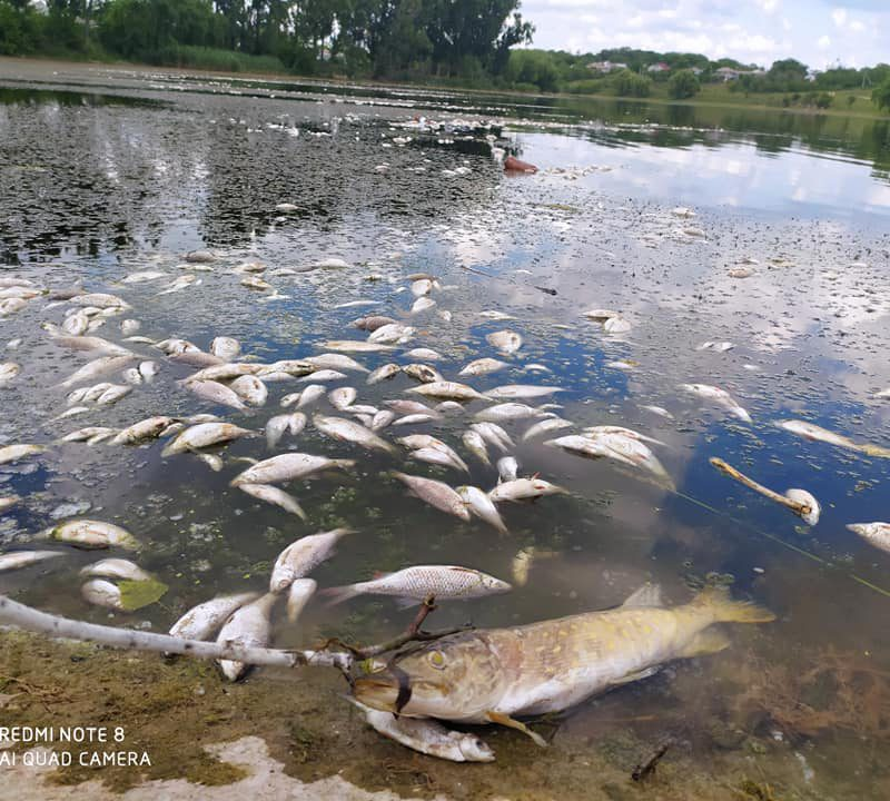 Убить рыбу