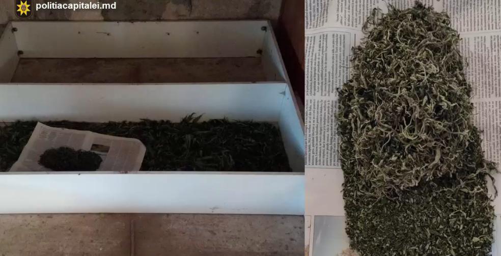 "Операция ""MAC-2020"": Полиция нашла наркотики в доме жителя Вадул-луй-Водэ (ВИДЕО)"