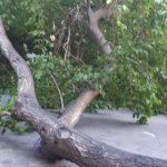 Во дворе на Ботанике упала крупная ветка