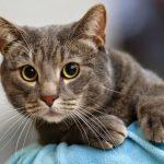 Примария Кишинёва организует бесплатную стерилизацию бездомных кошек