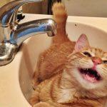 Некоторые жители столицы и Дурлешт временно останутся без воды