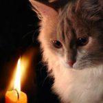 В трёх секторах Кишинёва в четверг не будет света