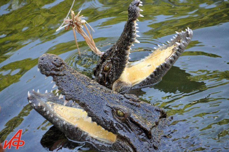 Вьетнам глазами Взорова. Крокодиловая ферма