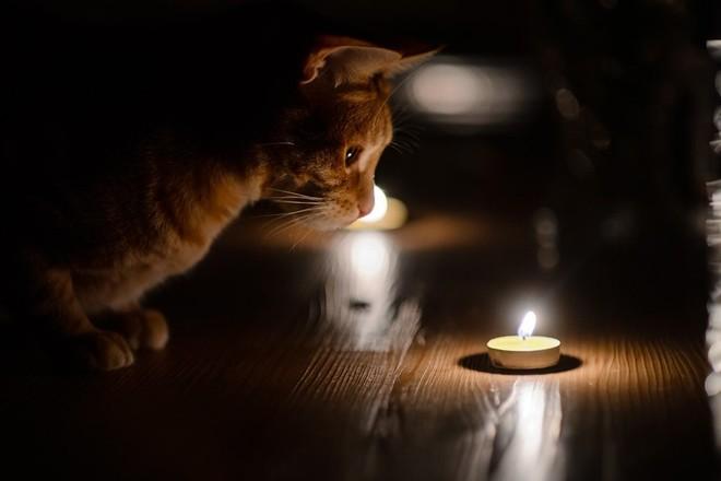 Сотни жителей Чекан и Рышкановки останутся сегодня без света