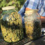 Полиция конфисковала марихуану на полмиллиона леев и задержала пятерых членов наркогруппировки (ФОТО, ВИДЕО)
