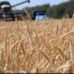 Вступили в силу новые меры поддержки молдавских аграриев