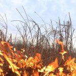 Хотела разжечь костёр, но устроила пожар: пенсионерка попала в больницу с ожогами