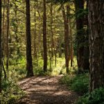 (ОБНОВЛЕНО) В лесу в Шолданештах заблудилась 12-летняя девочка