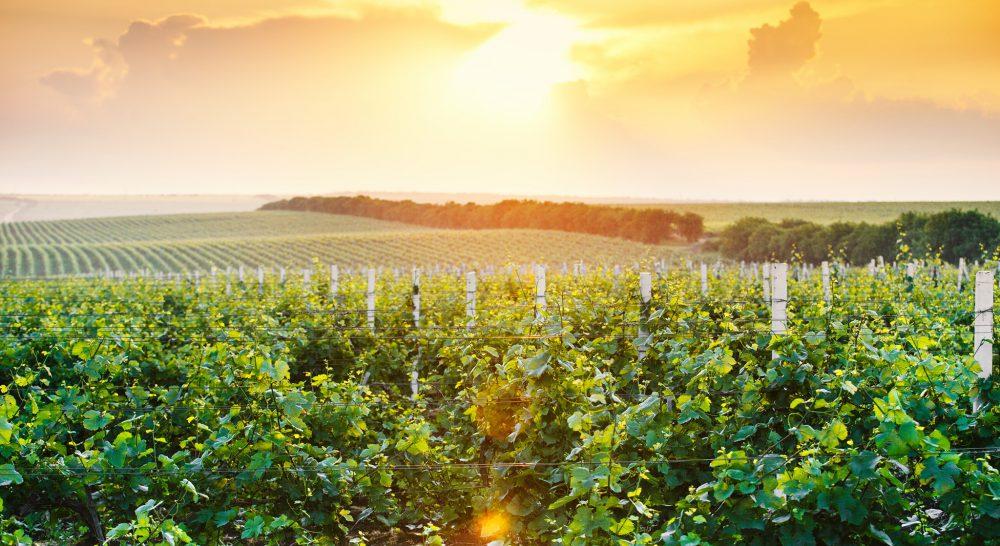 Кику: Празднование Дня вина стало прекрасной традицией