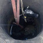 Спецоперация в Яловенах: спасатели вытащили 300-килограммовую корову из ямы (ФОТО)
