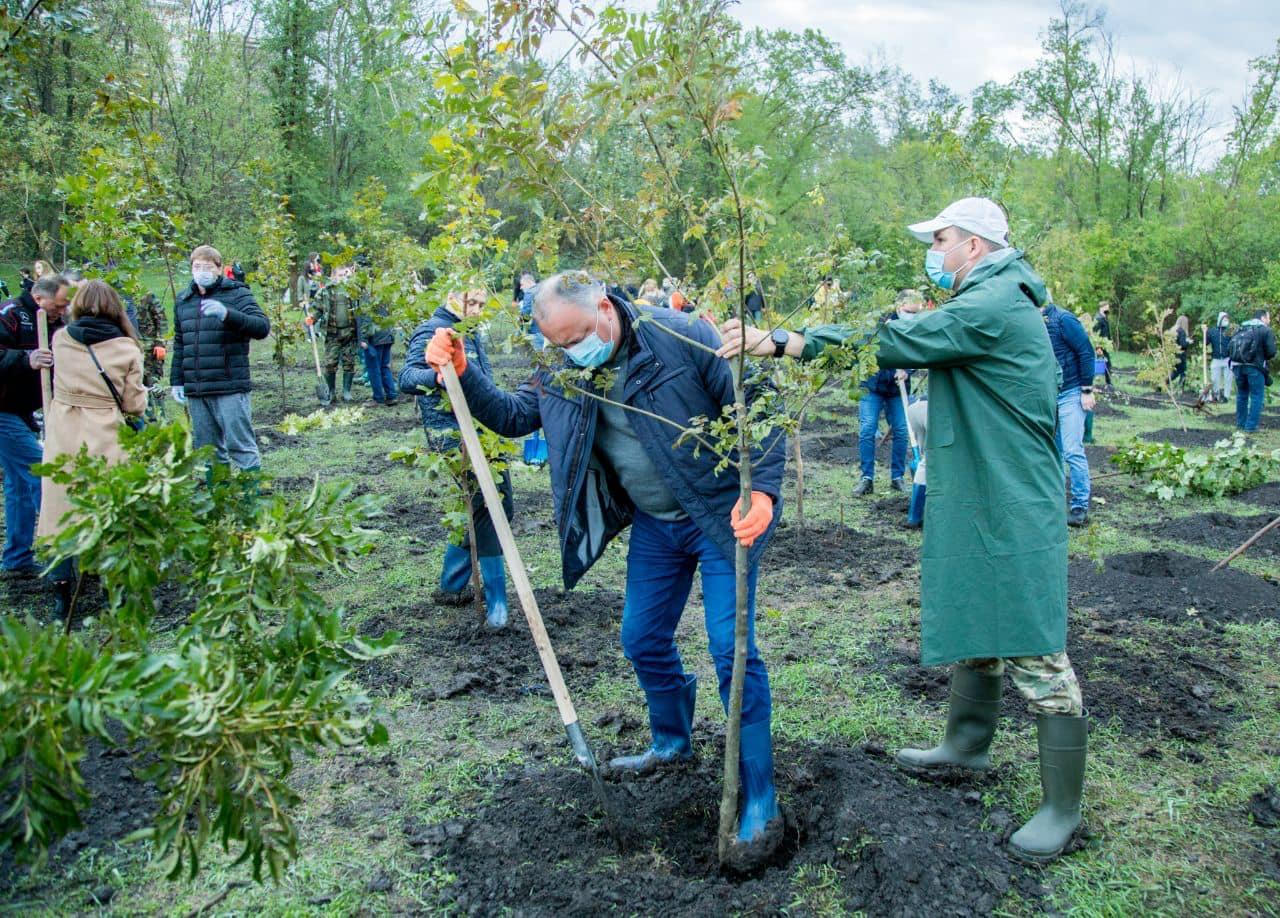 Игорь Додон принял участие в запуске кампании по озеленению столицы (ФОТО, ВИДЕО)