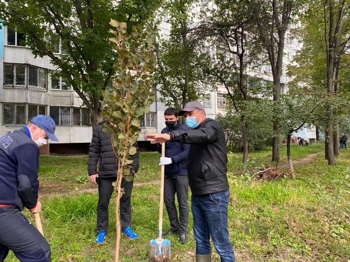 В секторе Рышкановка на участке, отвоёванном у незаконно получившей его строительной компании, посадили деревья