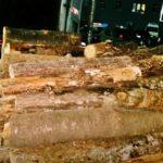 В Криулянах выявили факт незаконной продажи дров (ВИДЕО)