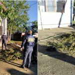 Обыски в Глодянах: двое жителей организовали дома склад марихуаны (ФОТО)