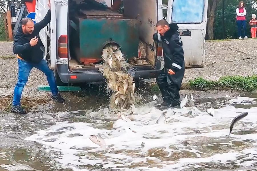В два столичных озера выпущено около 2 тонн рыбы (ФОТО, ВИДЕО)
