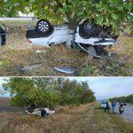 ДТП у Первомайска: автомобиль сбил собаку, вылетел с трассы и перевернулся