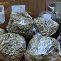 Молдаванина поймали в Италии с марихуаной в кастрюле (ВИДЕО)