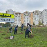 В субботу в Кишинёве состоится очередная акция по посадке деревьев: узнайте адреса