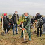 На Ботанике сегодня посадили тысячу деревьев
